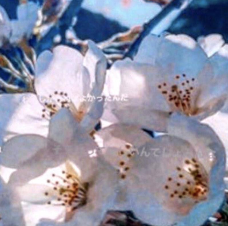 足立梨花桜アップ